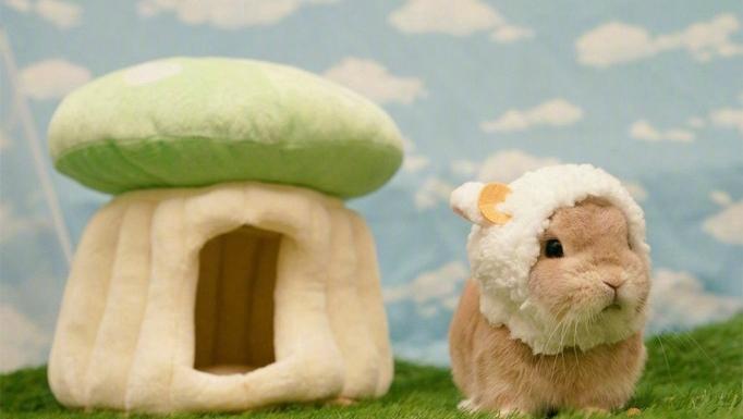 """""""您好,您有一只兔羊羊上线,请注意查收"""""""