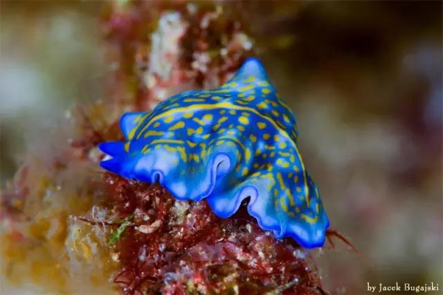 海蜗牛,能随机变雌雄的海洋最萌动物
