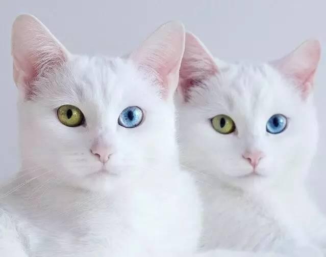偶尔会一起合照, 看得出来他很爱两只猫咪. 捡到两个宝了