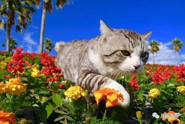有日本春天开得最浪漫的樱花~ 有一团团一簇簇红似火的绣球花~ 还有