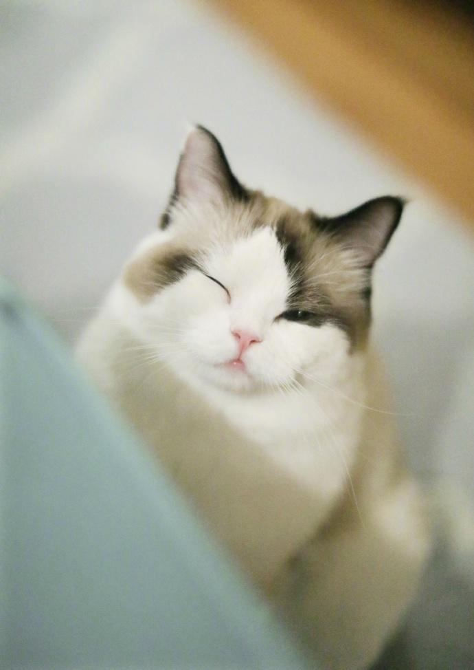 狐狸馒头听说你今天很累,特地送来一个wink!