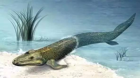 第一批有翼昆虫 12月23日 第一批树;第一批爬行动物 12月24日 恐龙