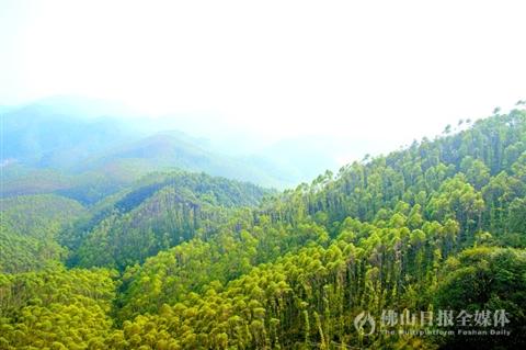 高山林海雾风景图片