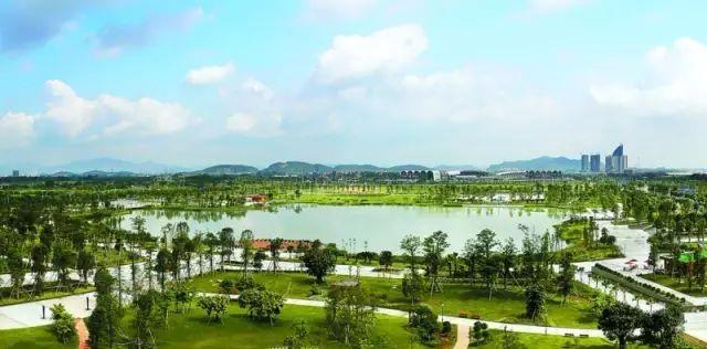 灿烂紫荆,幽香桂花……高明明城将新增一片绿树花海图片