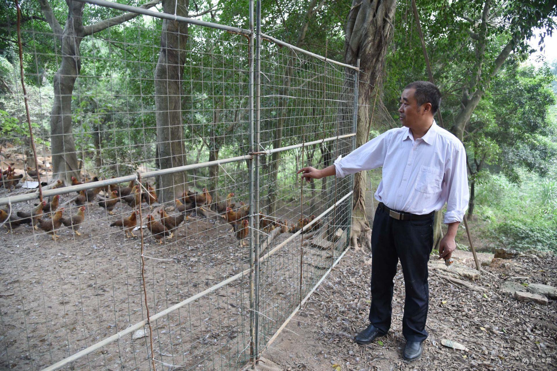 """他将南山""""走地鸡""""摇身变成""""凤凰""""!这家农业养殖企业不简单!"""