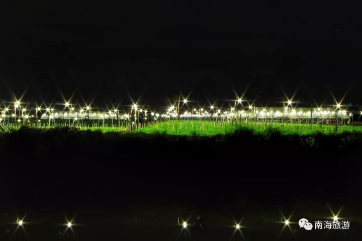 这片灯海花田的位置,位于南海里水和顺金贤路到贤鲁岛一带.